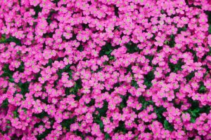 Lila-Polster-098-c-300x200.jpg