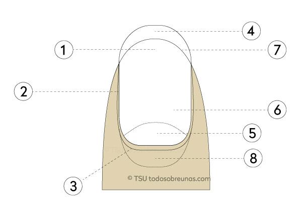 ES) (EN) – Las uñas de las manos y de los pies (anatomía y ...