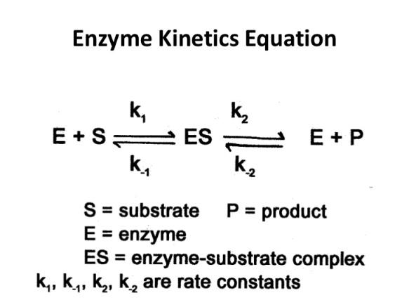 enzyme-kinetics-17-728.jpg